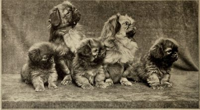 History of the Pekingese